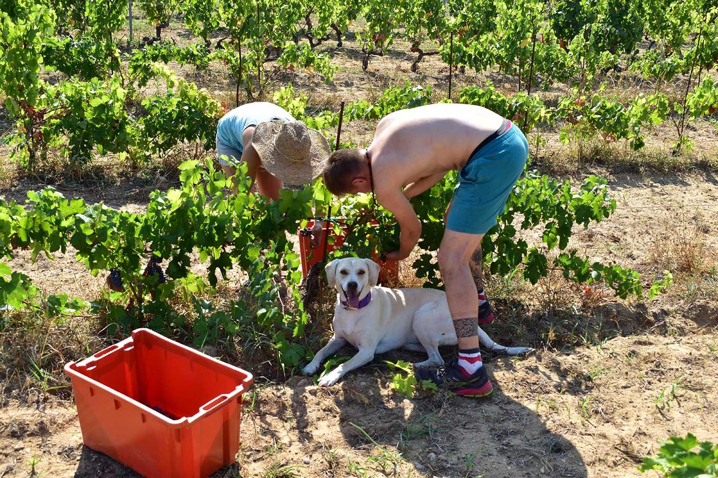 Druga radionica vinogradarstva